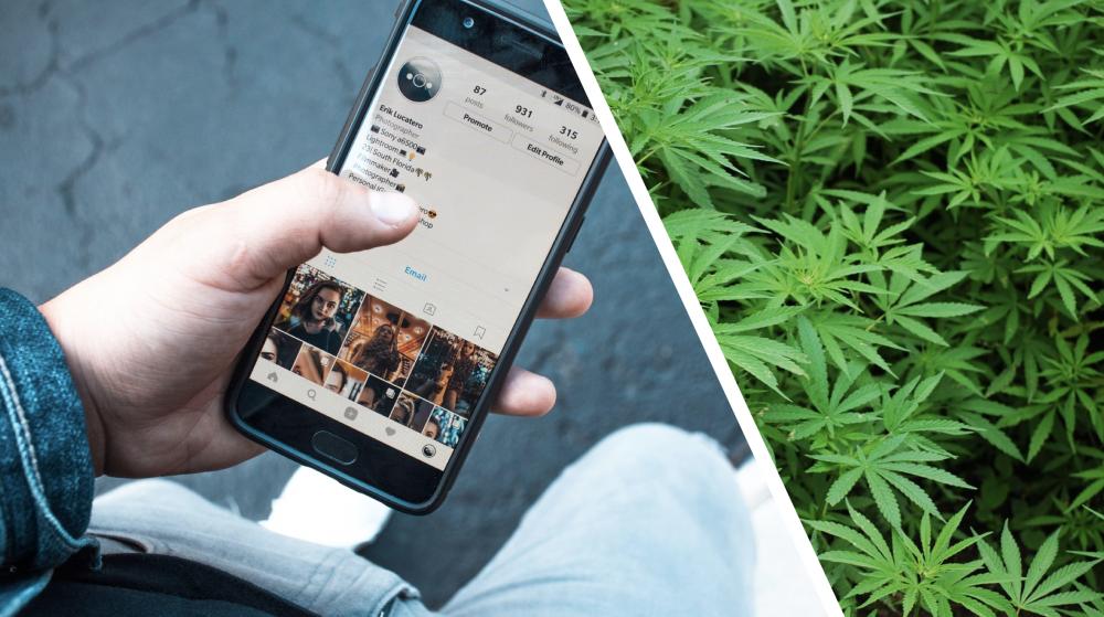 cannabis legale buytron